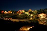 紅葉まつり(ライトアップ)を開催します(11月25~27日)のイメージ
