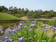 みどりの散策ツアー(西本願寺~梅小路公園周辺)を開催します(5月27日)
