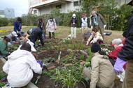 花壇づくり講習会(前期)(5/26~)の参加者を募集します