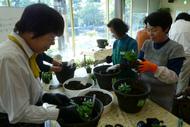 園芸講習会(10月18日から全4回)の参加者募集