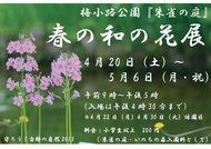 春の和の花展を開催します(4月20日~5月6日)
