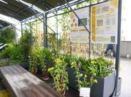 京都駅ビル「緑水歩廊」でのキクタニギク(菊渓菊)の展示について