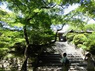 6月29日(日)開催 「みどりの散策ツアー・初夏」~山科疏水から毘沙門堂へ~ 参加者募集