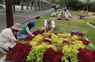 花を触りながら学ぶ!花壇づくり講習会(後期)の参加者を募集します