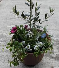 季節の園芸教室「春の寄せ植え」(3月20日)参加者を募集
