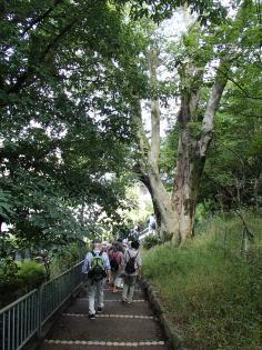 みどりの散策ツアー(太秦周辺)のイメージ