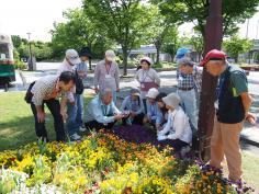 花壇で学ぶ みどりのデザイン教室(後期)のイメージ