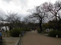 円山公園の桜0319_2.JPGのサムネイル画像