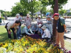 まちを彩る花植え教室(前期)のイメージ