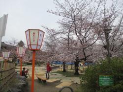 園内の桜0401