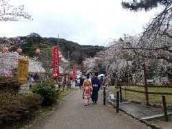 園内の桜0402