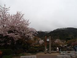 園内の桜①0404