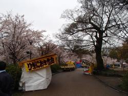 園内の桜③0404