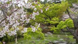 園内の桜③0408