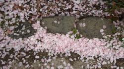 園内の桜⑥0408
