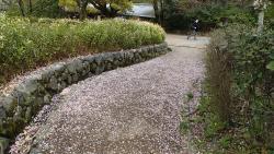園内の桜⑤0408