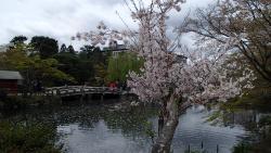 園内の桜②0408