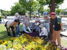 季節を彩る花植え教室のイメージ