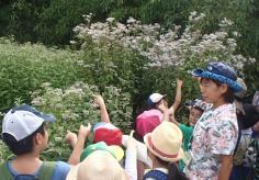 梅小路子ども自然観察会のイメージ