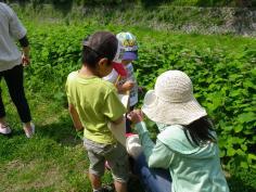 自然あそび教室『春の草花観察と草だんごづくり 』のイメージ