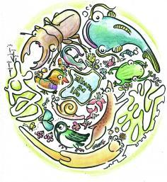 宝が池連続学習会『宝が池の森の環境基盤をまなぶ/地質・土壌』のイメージ