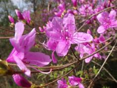 ふらっとウォッチング~ツツジ咲き誇る、宝が池ハイキング~のイメージ