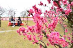 梅まつりin梅小路公園2月23日(土)~3月3日(日)のイメージ