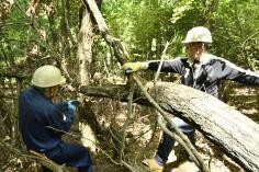 森林整備&アウトドア 「けむんぱアドベンチャー」メンバー募集のイメージ