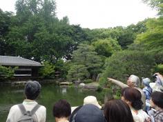 京の庭講座 2020 <近世の庭~『渉成園』>のイメージ