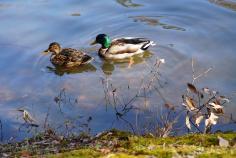 ふらっとウォッチング~春を待つ冬の宝が池をあるこう!冬鳥に会いに行こう!のイメージ