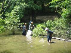 宝が池連続学習会2020第1回『森と水辺をつなぐいきものたち』のイメージ