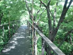 ~森を探検してみよう!~ いのちの森クイズラリー(7/24~8/29)のイメージ