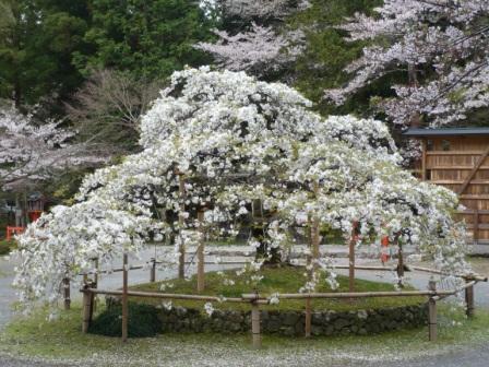 大原野神社神苑・鯉沢の池の画像