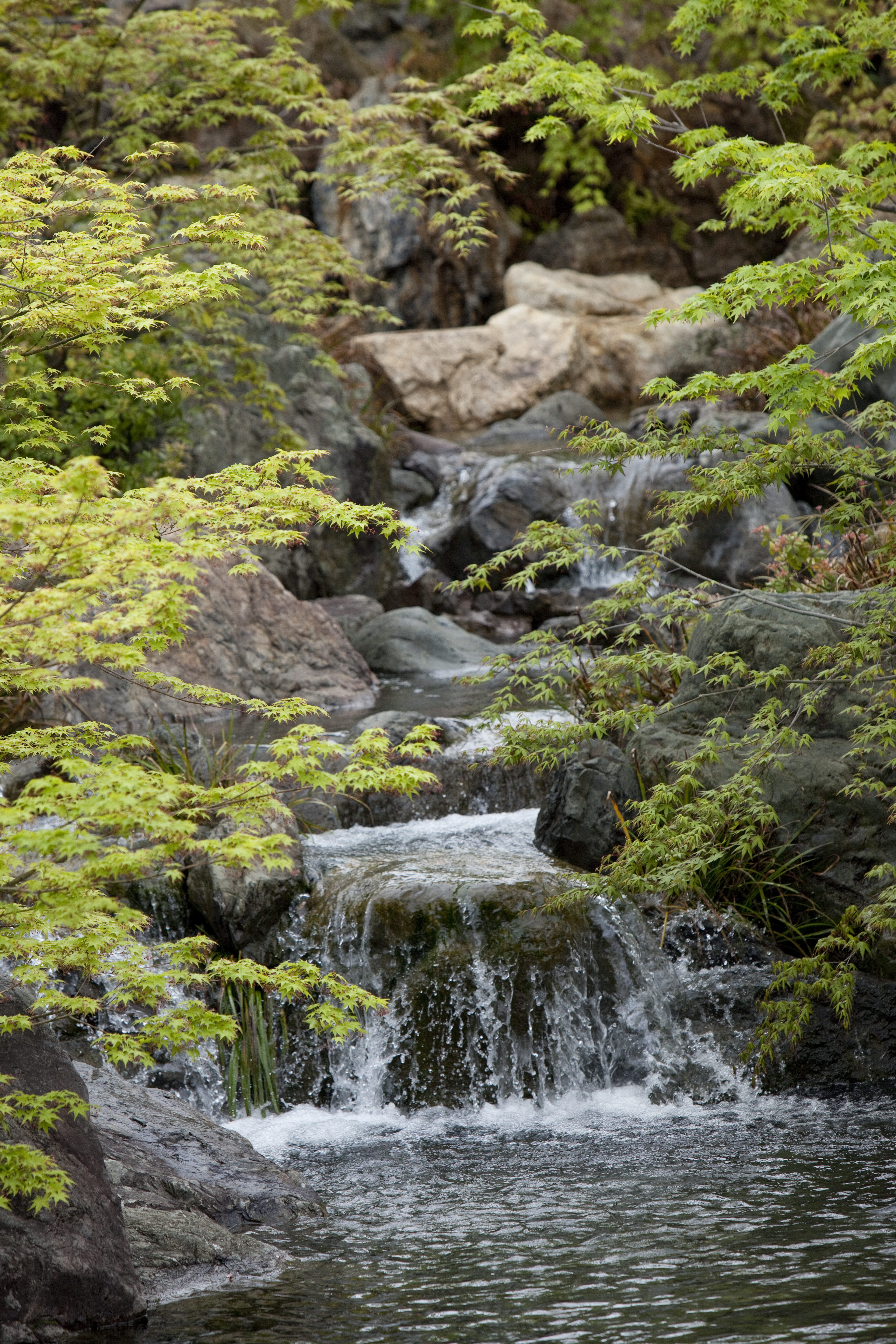 伏見稲荷大社・社務所庭園の画像