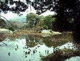 勧修寺庭園(氷池園)