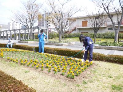春花壇植替え (1).jpg