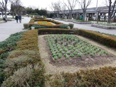 春花壇植替え 13.jpg