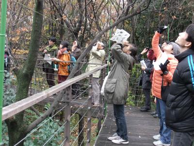 12月 自然観察会 野鳥 (1).jpg