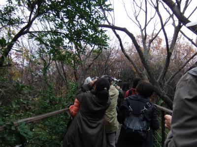 12月 自然観察会 野鳥 (2).jpg